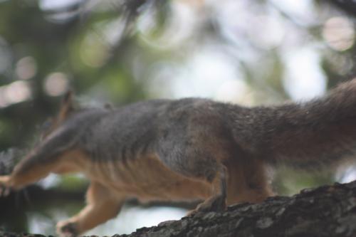 squirrel butt